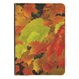 Itasca State Park, Fall Colors Kindle Touch Cover