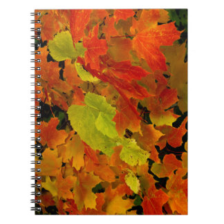 Itasca State Park, Fall Colors Notebooks