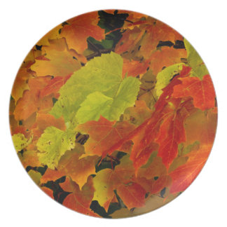 Itasca State Park, Fall Colors Plate
