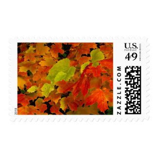 Itasca State Park, Fall Colors Postage Stamp