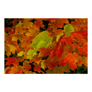 Itasca State Park, Fall Colors Poster