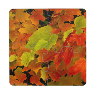 Itasca State Park, Fall Colors Puzzle Coaster