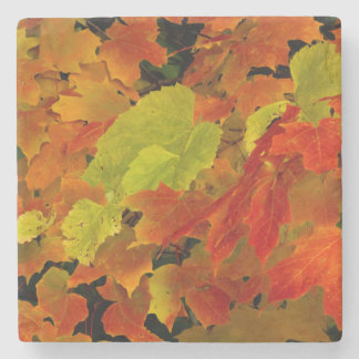 Itasca State Park, Fall Colors Stone Coaster