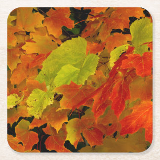 Itasca State Park, Fall Colors Square Paper Coaster