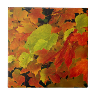 Itasca State Park, Fall Colors Tile