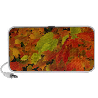 Itasca State Park, Fall Colors Travel Speaker