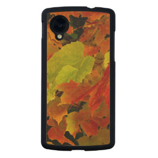 Itasca State Park, Fall Colors Carved® Maple Nexus 5 Case