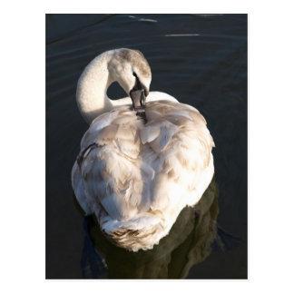 Itch - Swan Postcard