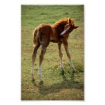 Itchy Foal Poster
