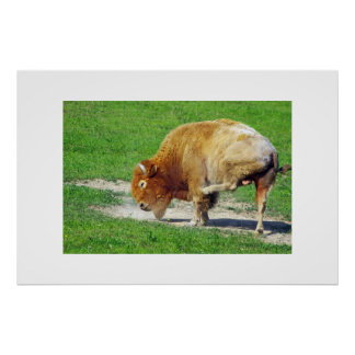 Itchy Golden Buffalo Print