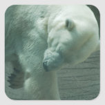 Itchy Polar Bear Stickers