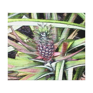 Item 041814 Pineapple Color Pencil Study Canvas Print