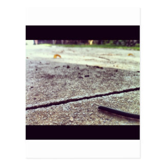 Its a Bugs life Postcard