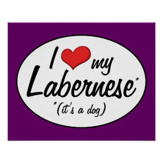 It's a Dog! I Love My Labernese Poster