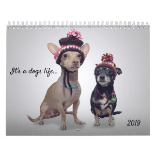 It's a dogs life, dog of the month calendar