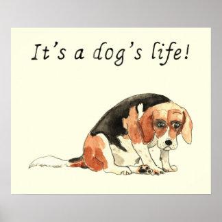 It's a dog's life! Sad Beagle watercolour art Poster