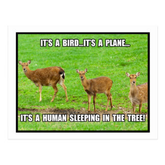 It's a Human Sleeping in the Tree Postcard