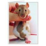 It's a little different Down Under Rattie Greeting Card