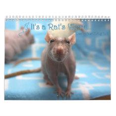 It's A Rat World Calendar 2016 at Zazzle