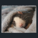 """It&#39;s a Rat&#39;s World Calendar<br><div class=""""desc"""">Another new year of rats from It&#39;s a Rat&#39;s World magazine. Bring in each month with cutie rats!</div>"""