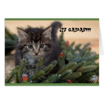 It's Catmas Chrismas card
