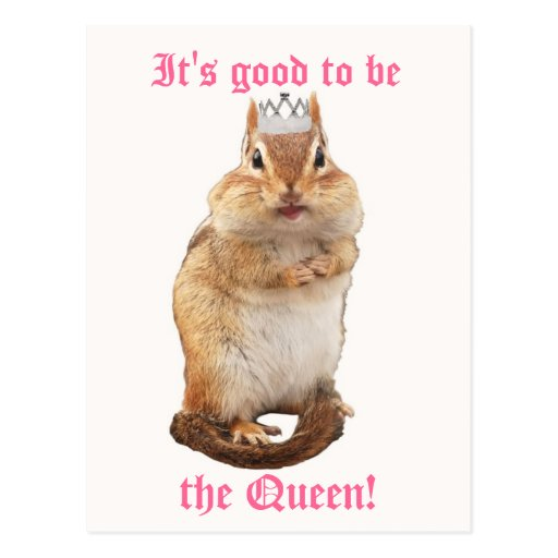 It's Good to be the Queen! Chipmunk Postcard