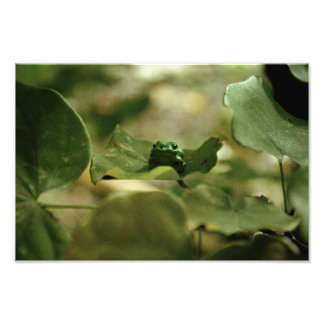 """""""It's not easy being green"""" photo print"""
