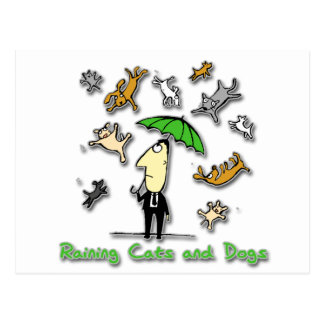 It's Raining Cats and Dogs Postcard