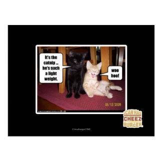 It's the catnip postcard