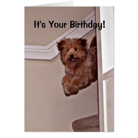 It's Your Birthday Excited Happy Dog Pet Card