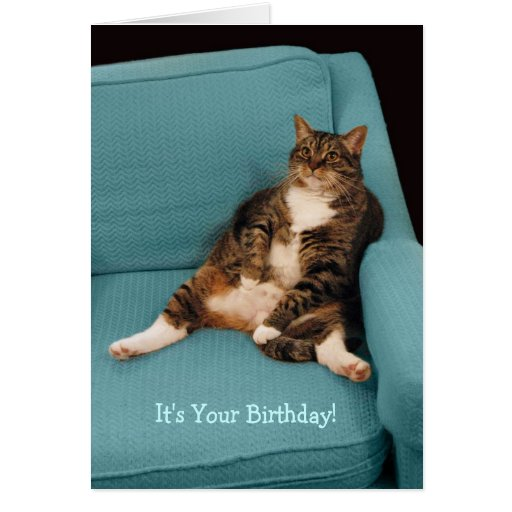 It's Your Birthday Fat Cat Greeting Card