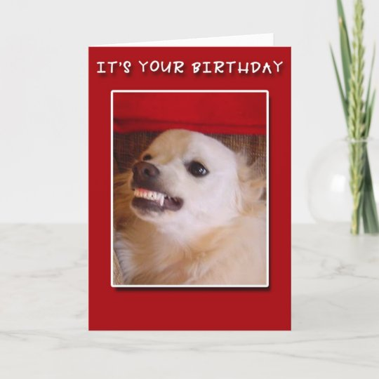 Its Your Birthday Grinning Dog Birthday Card Zazzle
