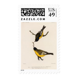 IV Chrysomitris psaltria Postage Stamps