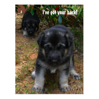 Ive got your back! German Shepherd Puppy Postcard