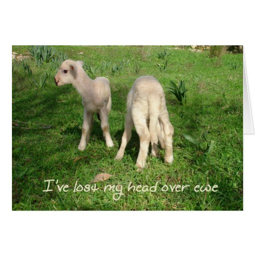 I've Lost My Head Over Ewe Greeting Card
