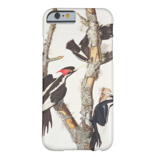Ivory-billed Woodpecker, 1829, () Barely There iPhone 6 Case