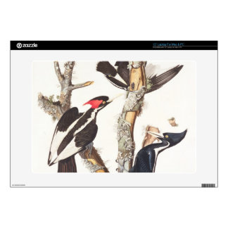 "Ivory-billed Woodpecker, 1829, (print) 15"" Laptop Skins"
