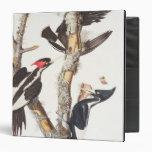 Ivory-billed Woodpecker, 1829, (print) Vinyl Binder