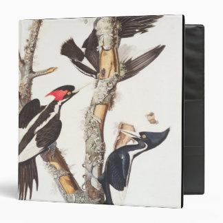 Ivory-billed Woodpecker, 1829, (print) Binder
