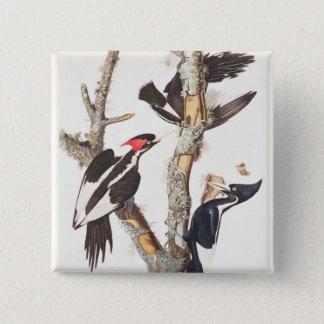 Ivory-billed Woodpecker, 1829, (print) Button