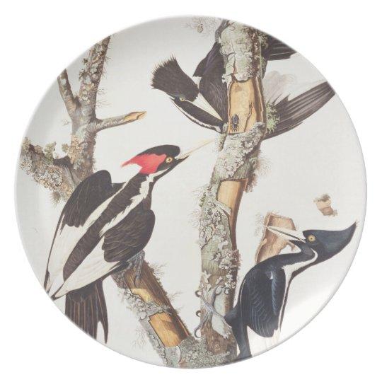 Ivory-billed Woodpecker, 1829, (print) Dinner Plate