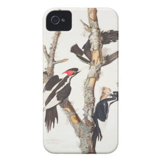 Ivory-billed Woodpecker, 1829, (print) iPhone 4 Case-Mate Case