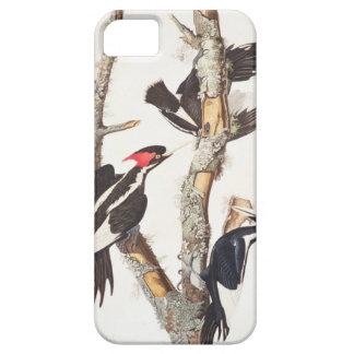 Ivory-billed Woodpecker, 1829, (print) iPhone SE/5/5s Case