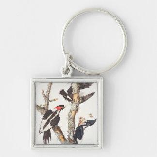 Ivory-billed Woodpecker, 1829, (print) Keychain
