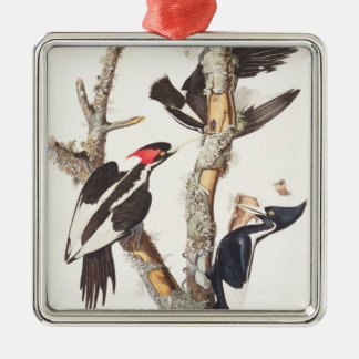 Ivory-billed Woodpecker, 1829, (print) Square Metal Christmas Ornament