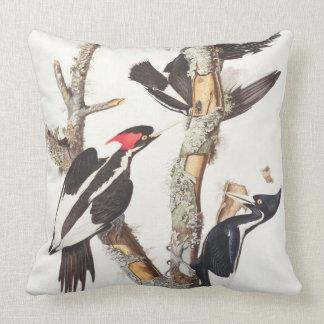 Ivory-billed Woodpecker, 1829, (print) Throw Pillow