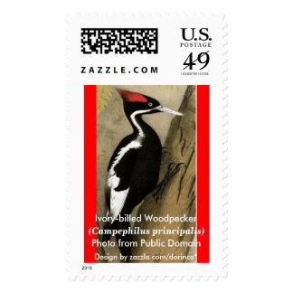 Ivory-billed Woodpecker 2 Postage Stamp