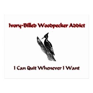 Ivory-Billed Woodpecker Addict Postcard
