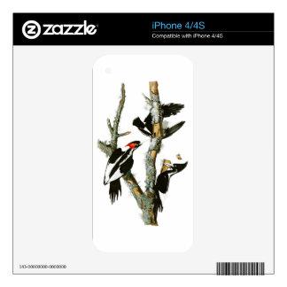 Ivory-billed Woodpecker Audubon Birds of America iPhone 4 Decal