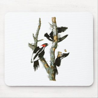 Ivory-billed Woodpecker Audubon Birds of America Mouse Pad